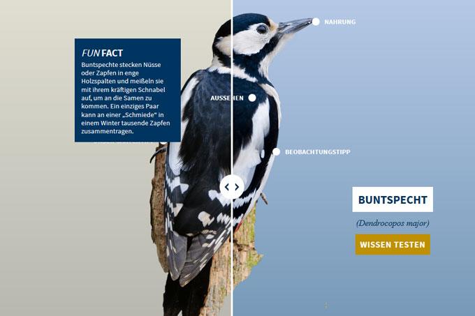 NABU-Vogeltrainer - Buntspecht