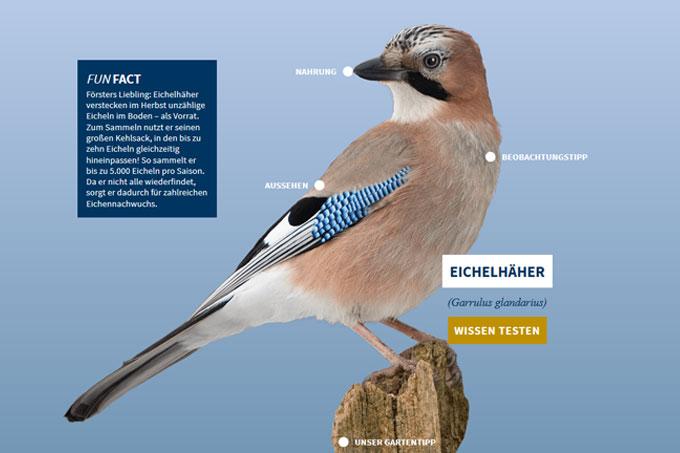 NABU-Vogeltrainer - Eichelhaeher