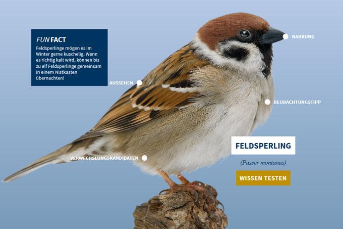 NABU-Vogeltrainer - feldsperling