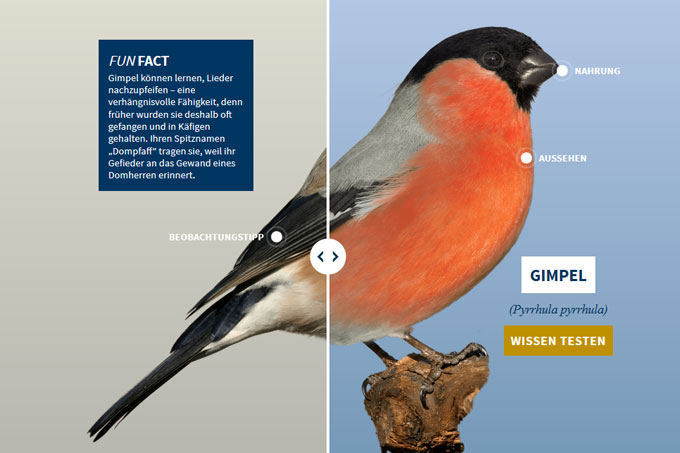 NABU-Vogeltrainer - gimpel