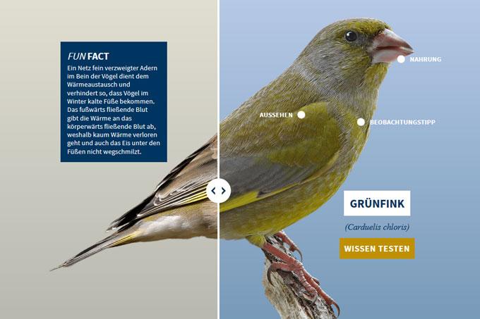 NABU-Vogeltrainer - gruenfink