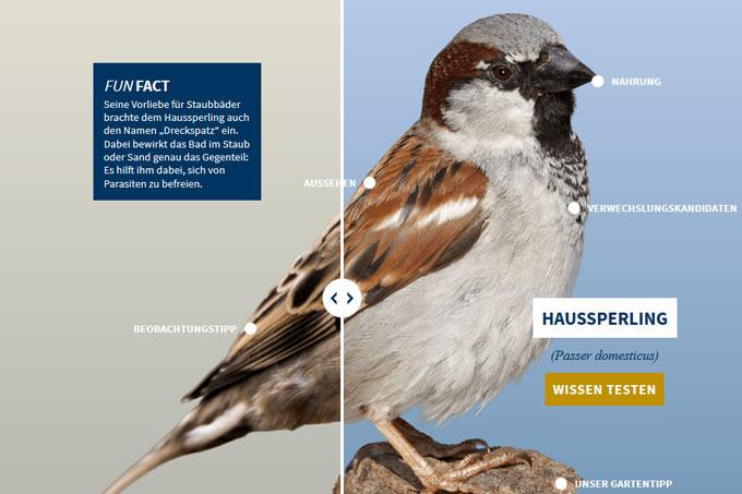 NABU-Vogeltrainer - haussperling