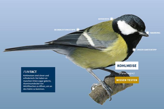 NABU-Vogeltrainer - Kohlmeise