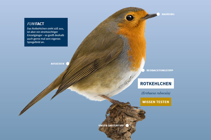 NABU-Vogeltrainer - Rotkehlchen
