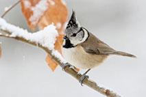 Stunde der Wintervögel - Foto: Frank Derer