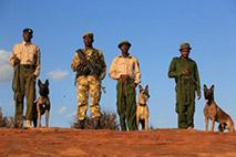 Spürhundestaffel in Kenia - Foto: David Sheldrick
