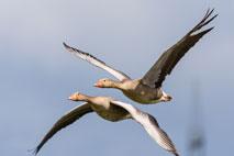 Wasservögel- Foto: OlafTitko