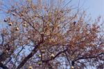 Lichtinstallation zu Artenschutz im Alltag: NABU-Baum am Hackeschen Markt in Berlin bei Tag