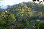 Tropischer Regenwald auf Gorontalo.