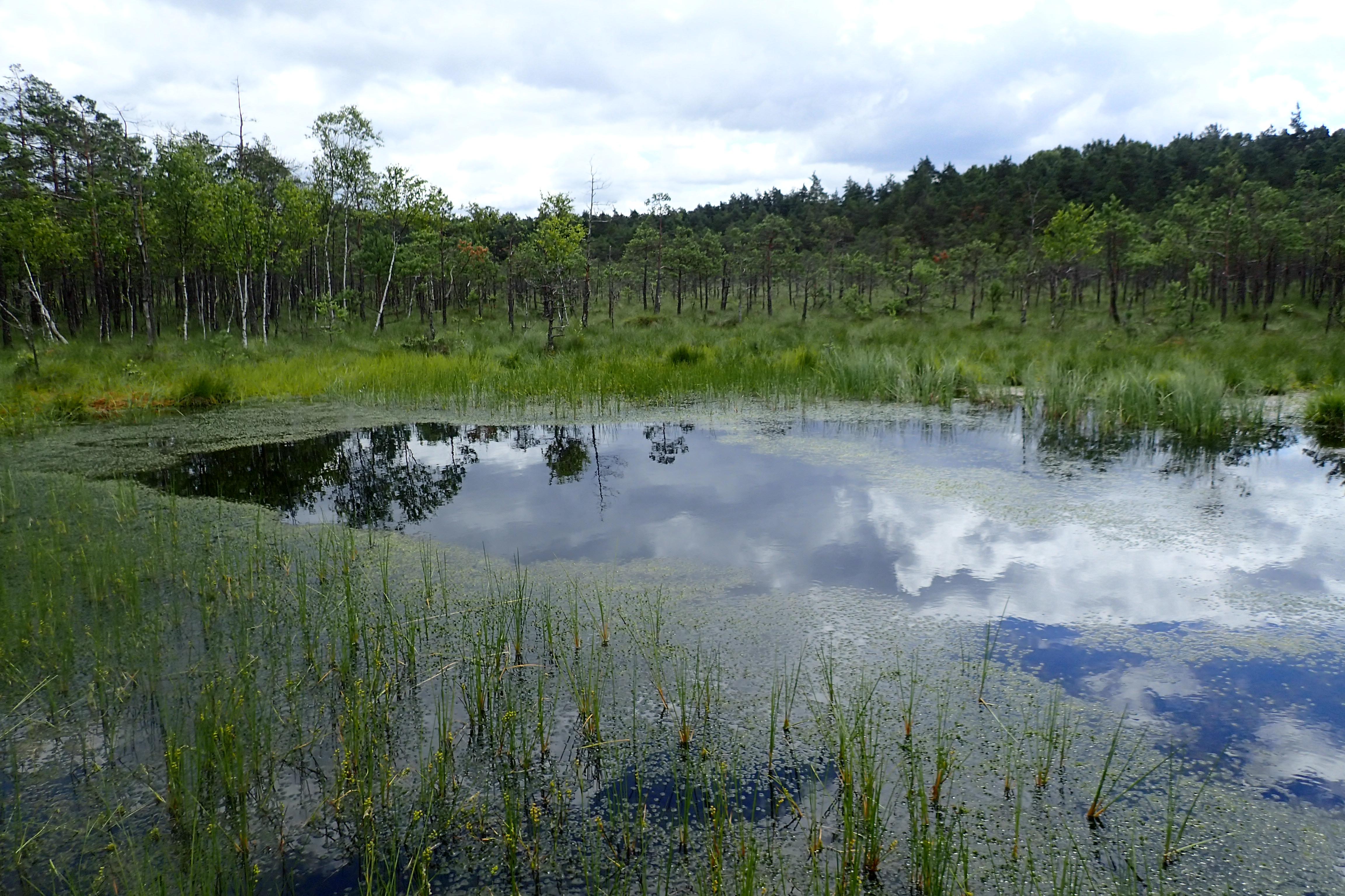 Kusowo-Moor in Westpommern