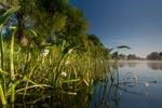 An der Unteren Havel entsteht wieder eine intakte Flusslandschaft.