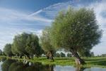 Wild und ursprünglich ist die Landschaft an der Unteren Havel.
