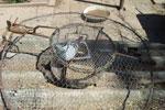 Habichtfangkorb mit lebender Ködertaube