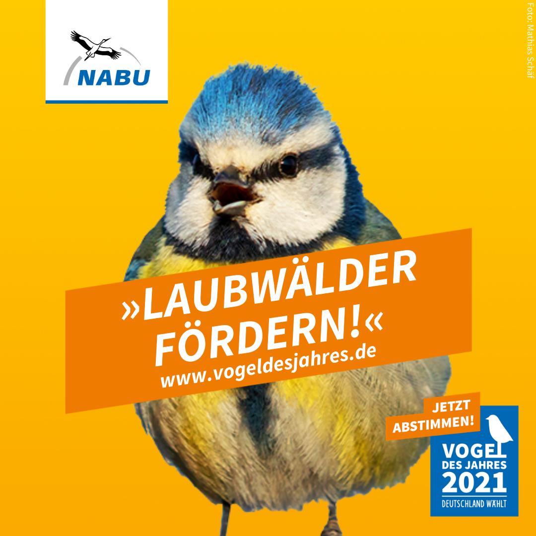 https://www.nabu.de/downloads/vdj/bilder-vogelwahl2021/Wahlplakate_Blaumeise.zip