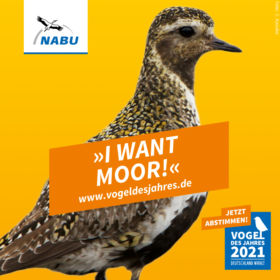 https://www.nabu.de/downloads/vdj/bilder-vogelwahl2021/Wahlplakate_Goldregenpfeifer.zip