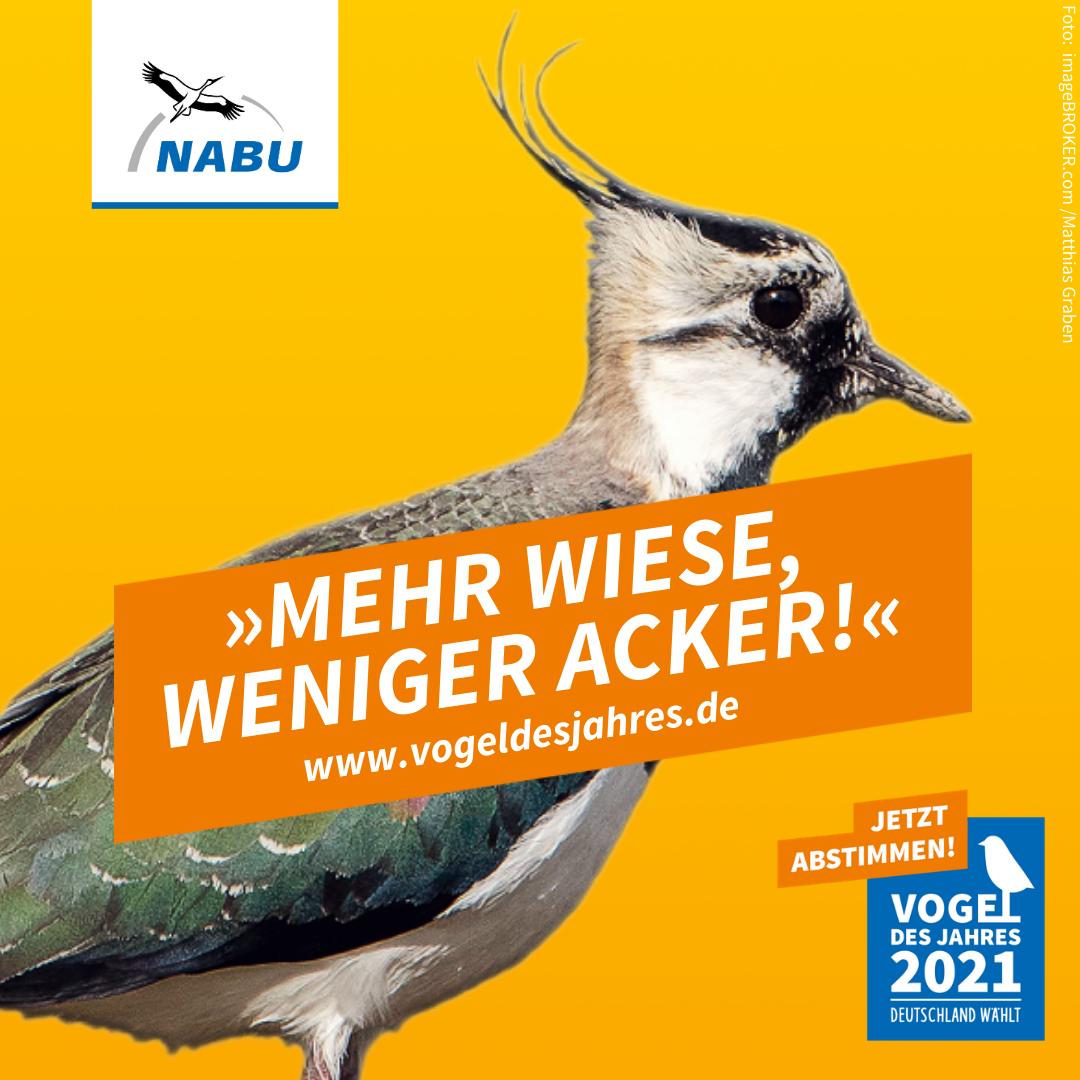 https://www.nabu.de/downloads/vdj/bilder-vogelwahl2021/Wahlplakate_Kiebitz.zip
