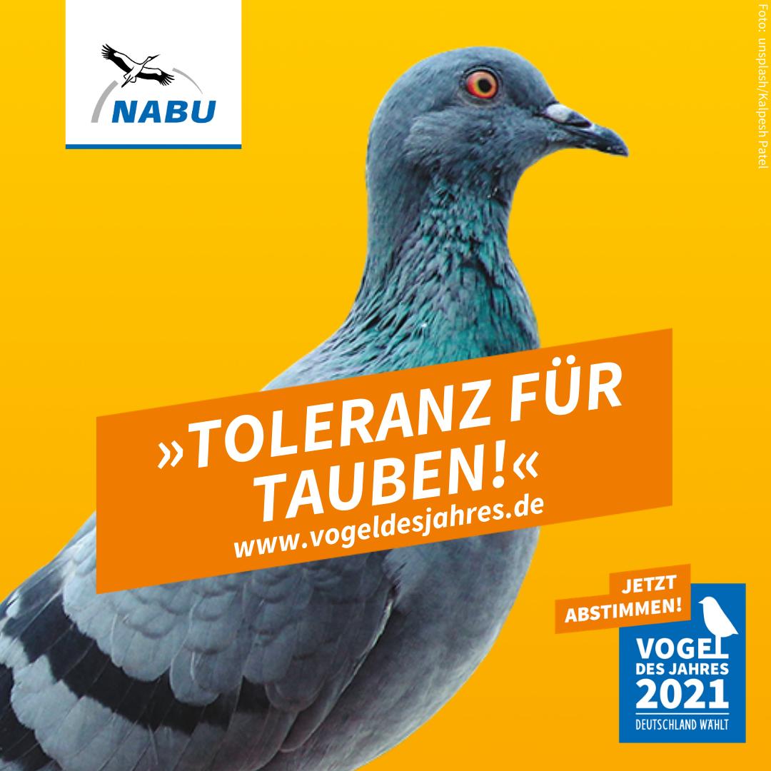 https://www.nabu.de/downloads/vdj/bilder-vogelwahl2021/Wahlplakate_Stadttaube.zip