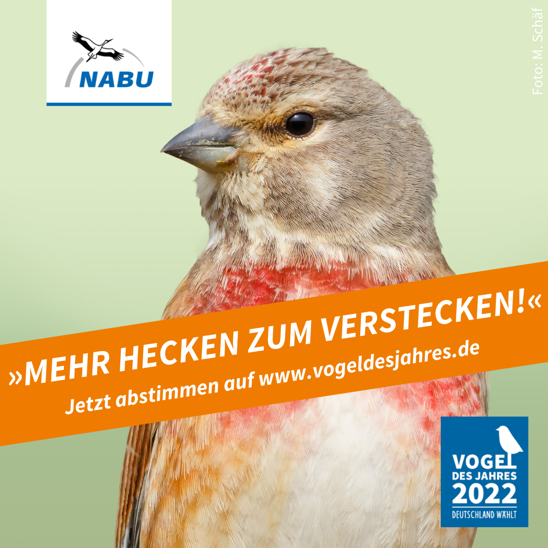 https://www.nabu.de/downloads/vdj/bilder-vogelwahl2022/Wahlplakate_Bluthaenfling.zip