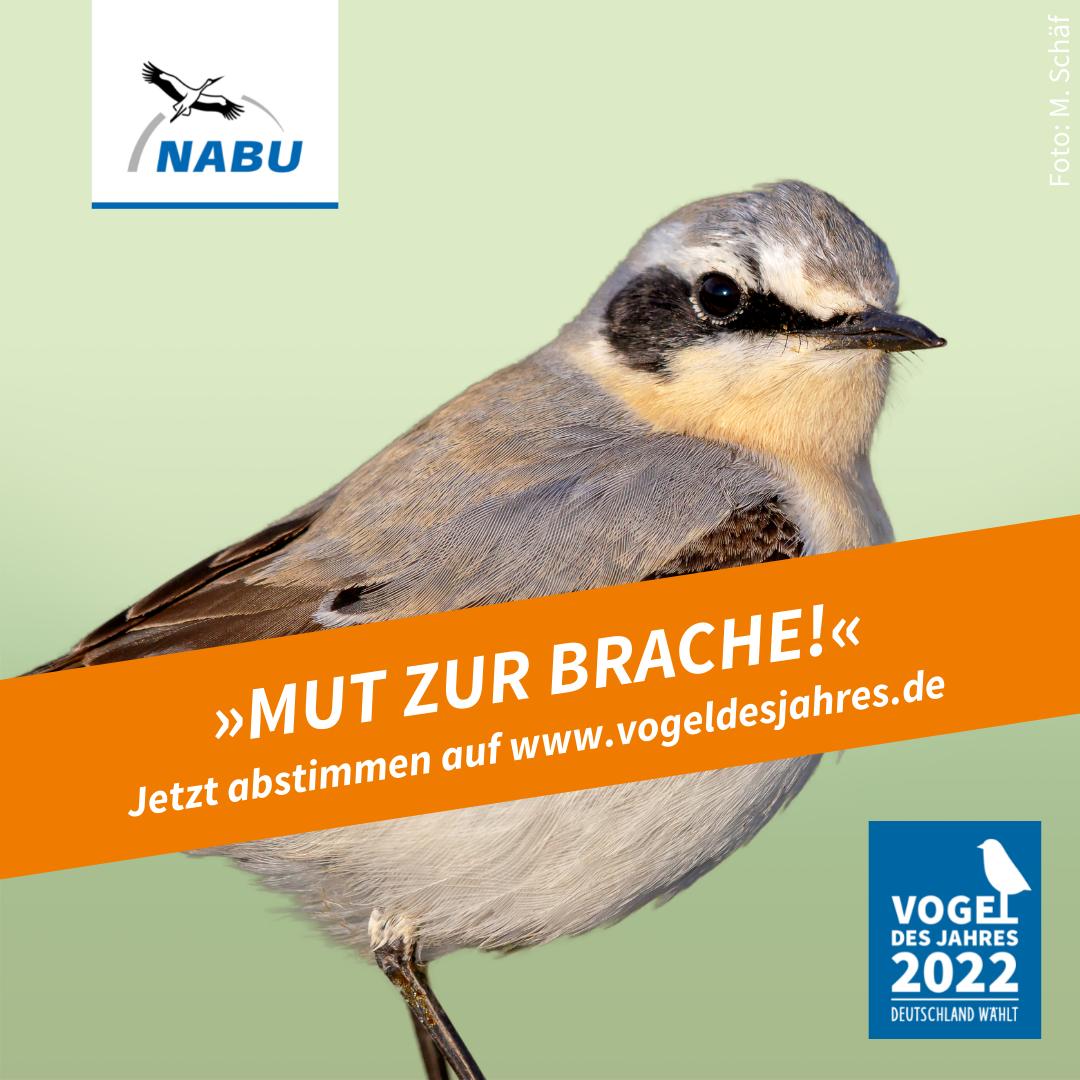 https://www.nabu.de/downloads/vdj/bilder-vogelwahl2022/Wahlplakate_Steinschmaetzer.zip