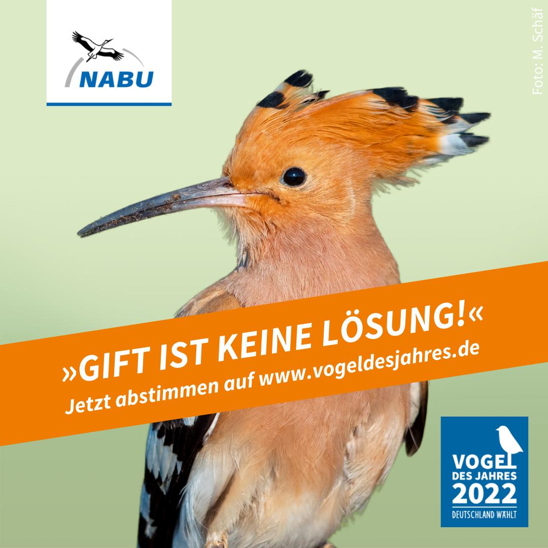 https://www.nabu.de/downloads/vdj/bilder-vogelwahl2022/Wahlplakate_Wiedehopf.zip
