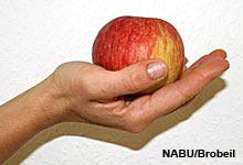 NABU spricht mit Arzt Matthias Kübler über Apfelunverträglichkeiten