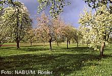 Diese Baumschulen bieten Hochstamm-Obstbäume an