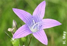 "NABU-Tagung ""Sag mir wo die Blumen sind…"" im Januar 2011"