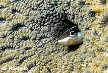 Fisch in Koralle