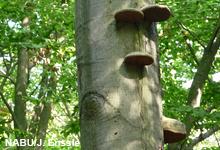Kein Bekenntnis zu Nachhaltigkeit im neuen Bundeswaldgesetz
