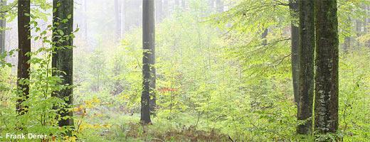 Frühherbstlicher Laubmischwald