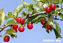 Neues NABU-Info mit Zahlen und Fakten