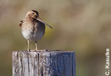 Der Vogel des Jahres 2013 braucht unseren Schutz