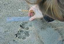 Spurenvermessen
