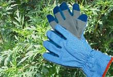 Ambrosie und Handschuhe