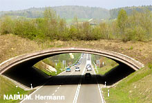 Grünbrücke B 31
