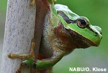 Konkrete Maßnahmen für gefährdete Amphibien umsetzen