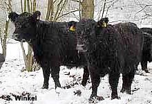 Galloways Josbach (Ohmbecken)