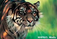 Pilotprojekt im Harapan-Regenwald soll Klima und Arten schützen