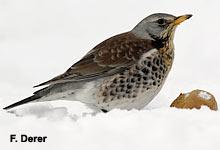 """Antworten auf häufig gestellte Fragen zur """"Stunde der Wintervögel"""""""