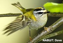 Neues NABU-Grundsatzprogramm Vogelschutz zum Download