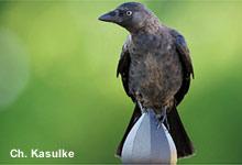 Sympathischer Vogel mit Imageproblemen