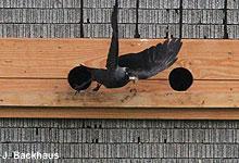 Aktive Hilfe für den gefährdeten Vogel