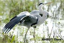Amphibien als Beute von Vögeln und Säugetieren
