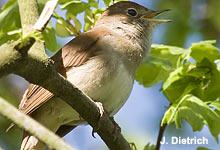Erweitern Sie Ihre Vogel-Kenntnisse
