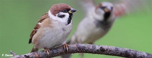 Im Mai ruft sie wieder: Die Stunde der Gartenvögel!