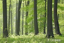 Die unterschätzte Klimaschutzleistung von Naturwäldern