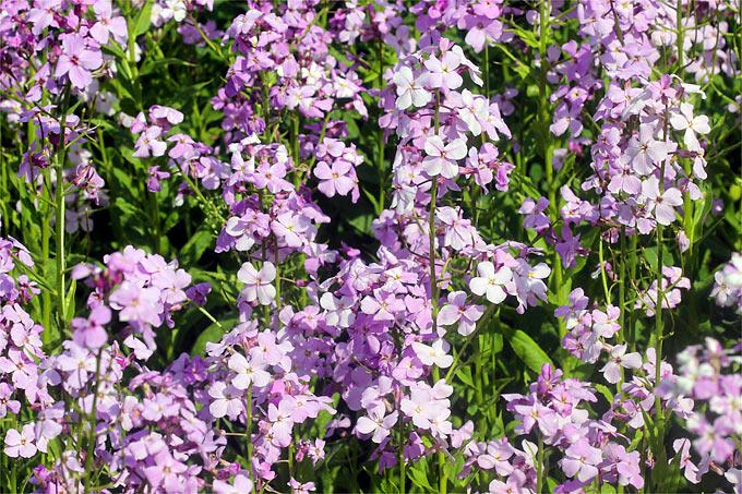 Fabelhaft Pflanzen für den Waldgarten - NABU @AU_27