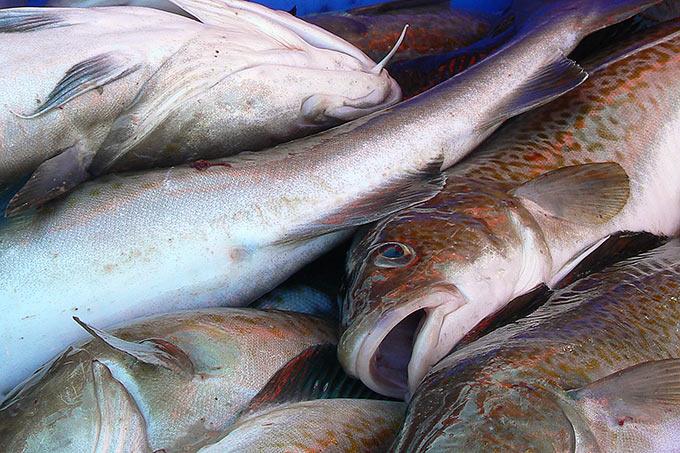 Viele Fisch Interessen