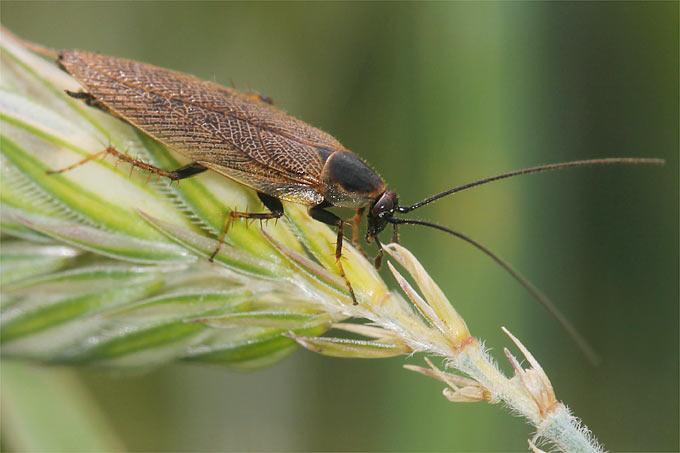 insekten kennenlernen