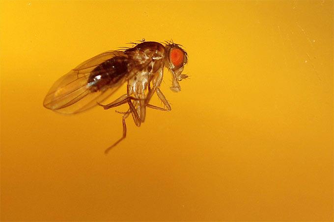 top 5 der au ergew hnlichsten insekten. Black Bedroom Furniture Sets. Home Design Ideas
